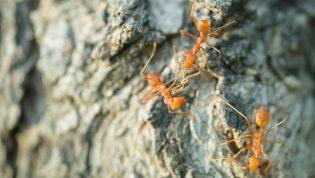 Sposoby na pozbycie się mrówek
