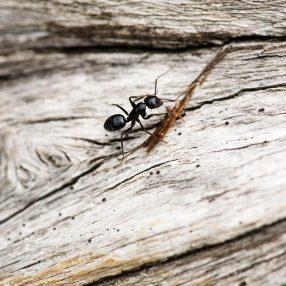 Sposoby na mrówki