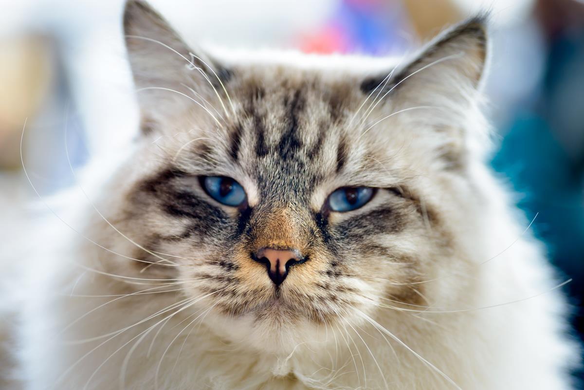 Odstraszacze na koty
