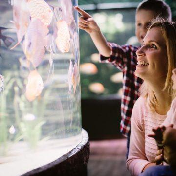 Skąd mętna woda w akwarium