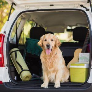 Jak chronić psa podczas podróży
