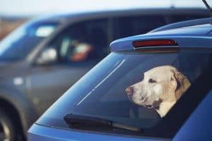 Transport psa