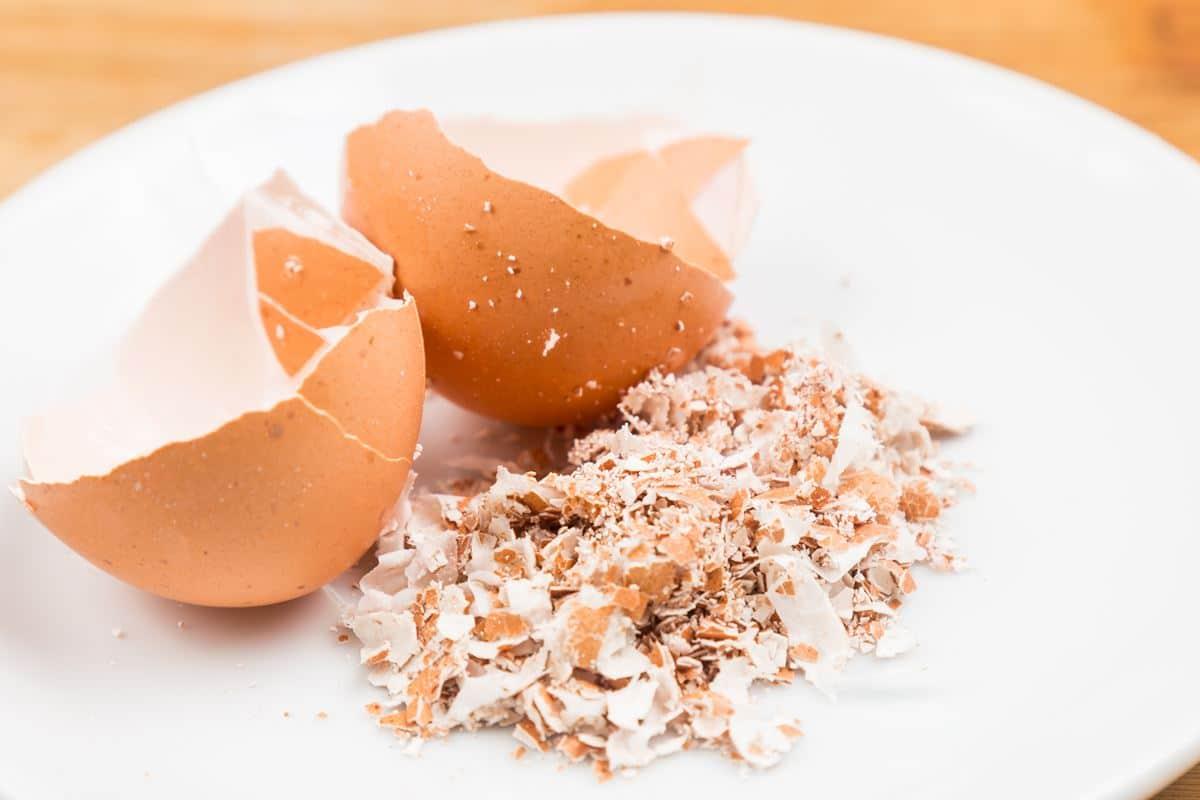 Skorupki z jajek zastosowanie