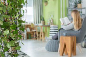 Bluszcz domowy w mieszkaniu