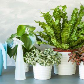 Ochrona roślin doniczkowych