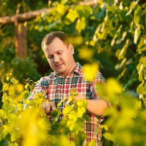 Jak dbać o winogrona