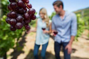 Kiedy sadzić winogrona