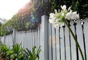 Ogrodzenie bluszcz