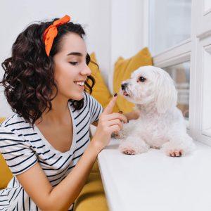 Jaki pies w małym mieszkaniu